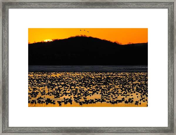 Snow Geese Sunrise Framed Print