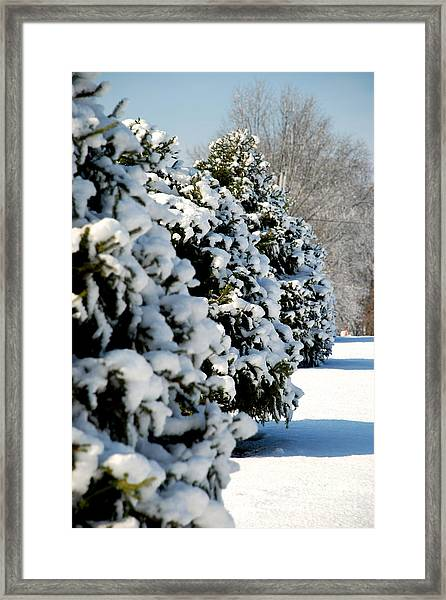 Snow In The Trees Framed Print