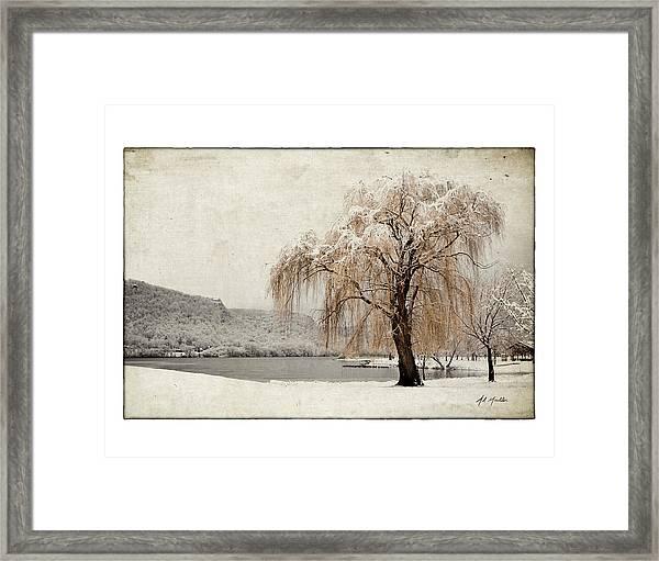 Snow Tree 1 Framed Print