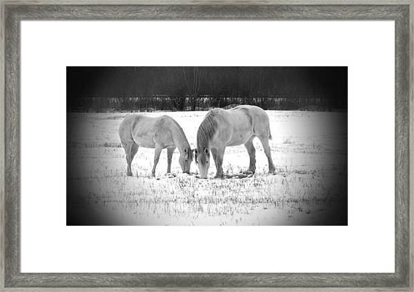 Snow White Beauties Framed Print