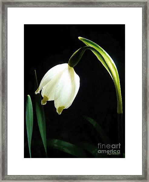 Snowflake Flower Framed Print