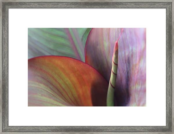 Soft Focus Petal Framed Print