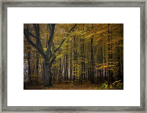 Solitaire Tree Framed Print