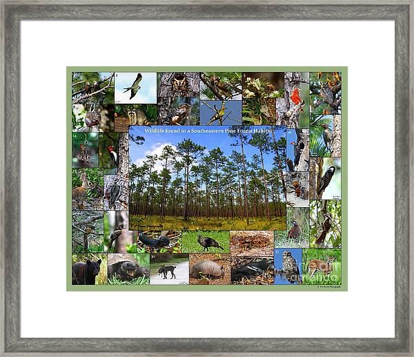 Southeastern Pine Forest Wildlife Poster Framed Print