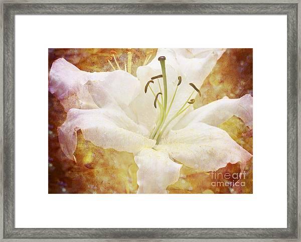 Sparkling Lily Framed Print