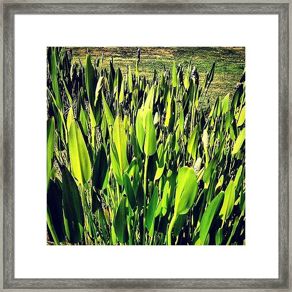 Spears Framed Print