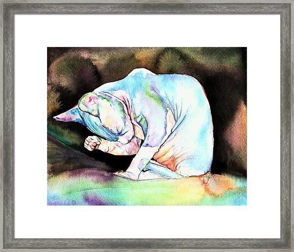 Sphynx Kitten Framed Print
