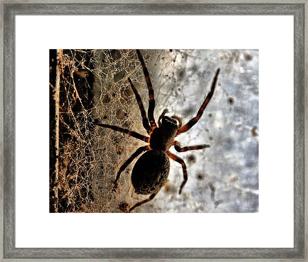 Spiders Home Framed Print