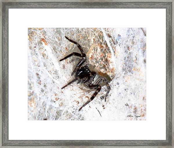Spiders Trap Framed Print