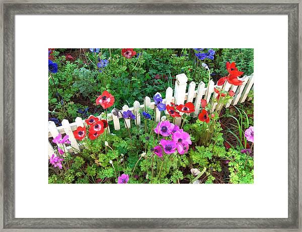Spring At Colonial Williamsburg Framed Print