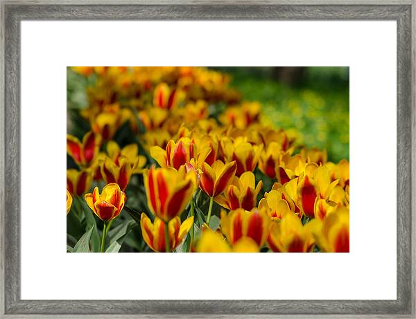 Spring Mood Framed Print