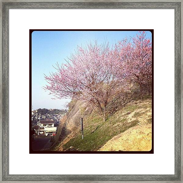 Spring Tree Framed Print