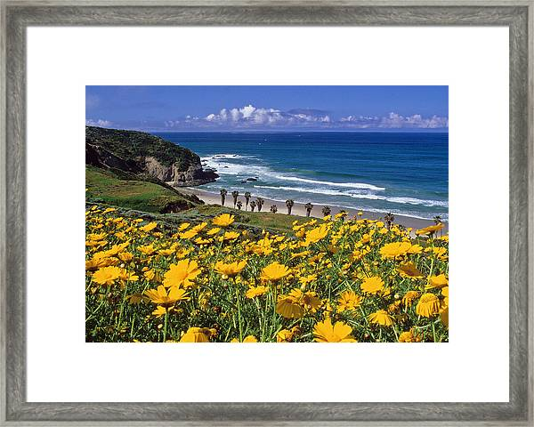 Springtime On The Headlands Framed Print