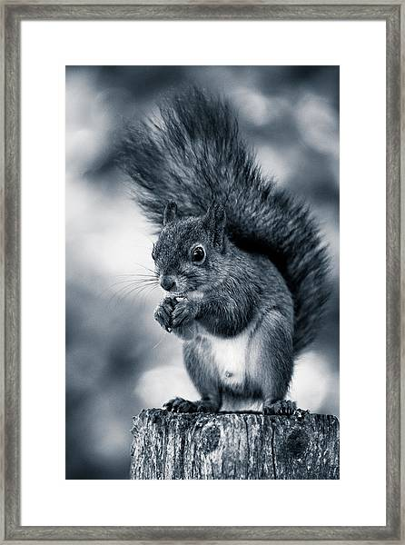 Squirrel In Monochrome Framed Print