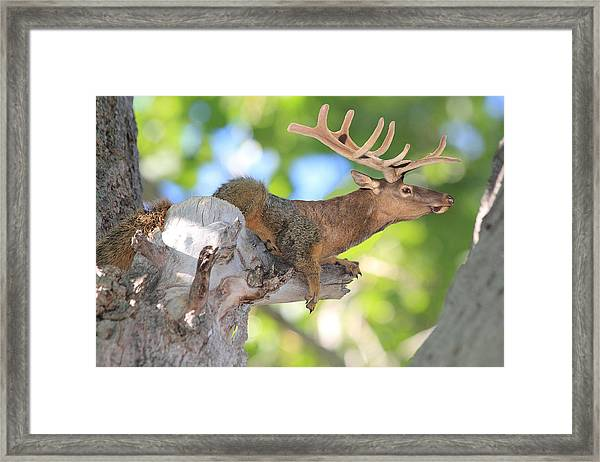 Squirrelk Framed Print