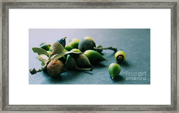 Squirrel's Harvest Framed Print