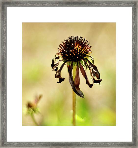 'stand Strong' Framed Print