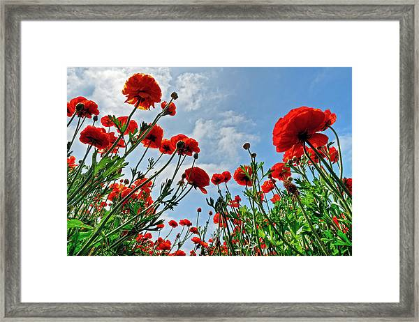 Standing Room Only Framed Print by Donna Pagakis