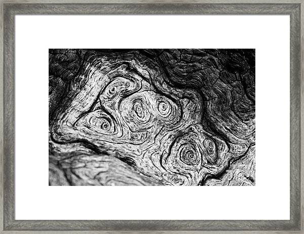 Starry Starry...  Bark II Framed Print