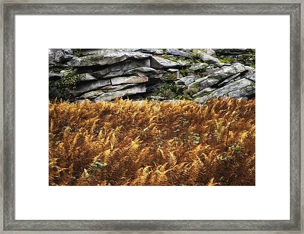 Stone Wall And Fern Framed Print