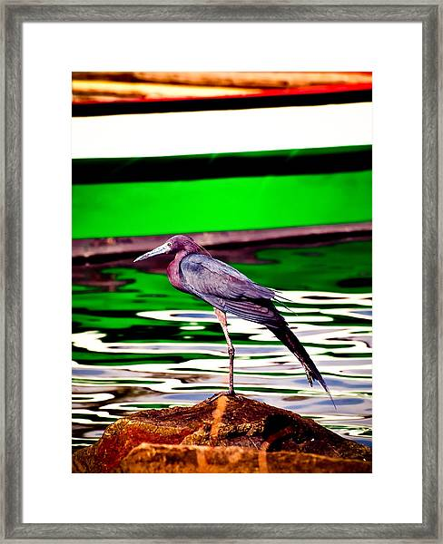 Stretching Bird Framed Print