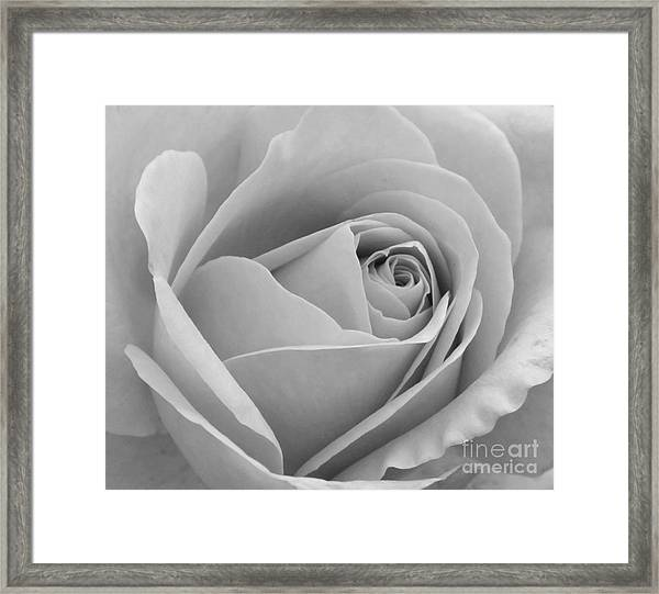 Study In Black And White Framed Print