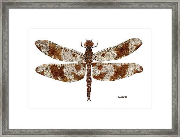Study Of A Female Filigree Skimmer Framed Print