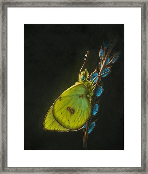 Sulpher Framed Print