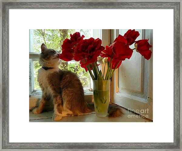 Summer - Cat 1 Framed Print by Alisa Tek