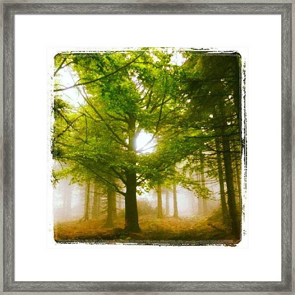 Summerskyforest Framed Print