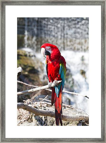 Sun Seeker Framed Print