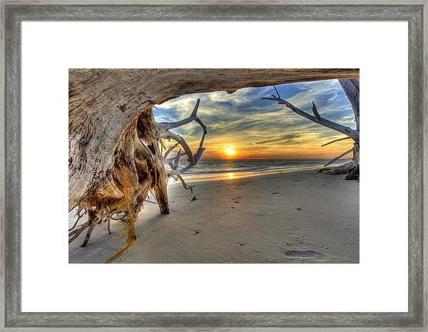 Sun Setting Under The Tree Framed Print