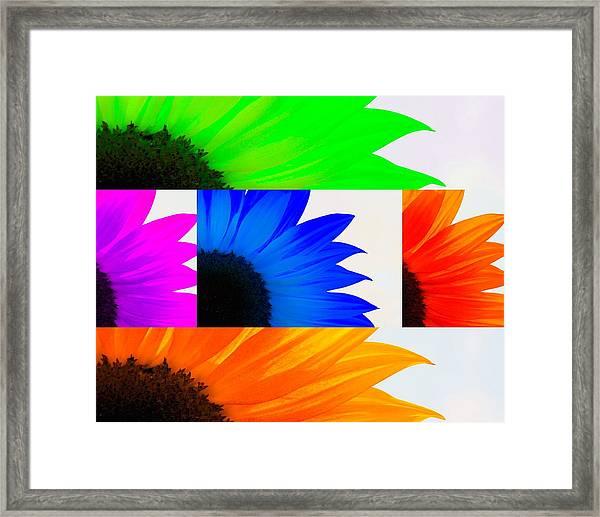 Sunflower Interrupted Framed Print