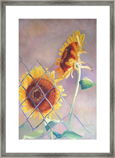Sunflowers Fenced Framed Print
