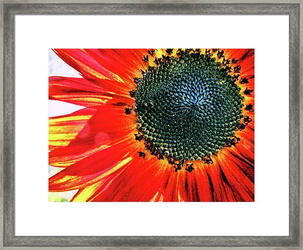 Sunny One Framed Print