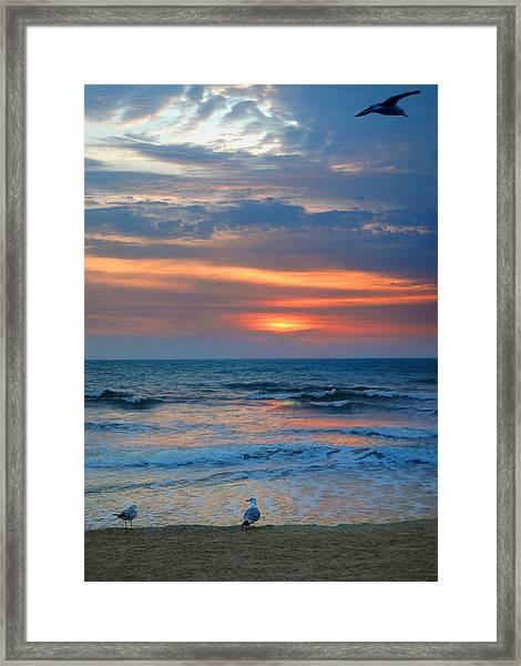 Sunrise With The Gulls Framed Print