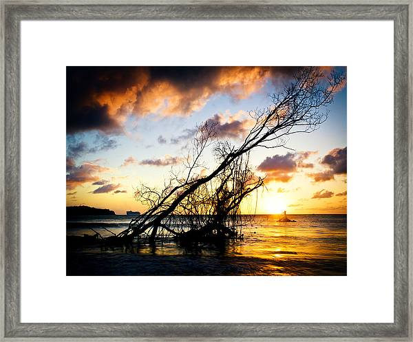 Sunset Drift Wood 2 Framed Print