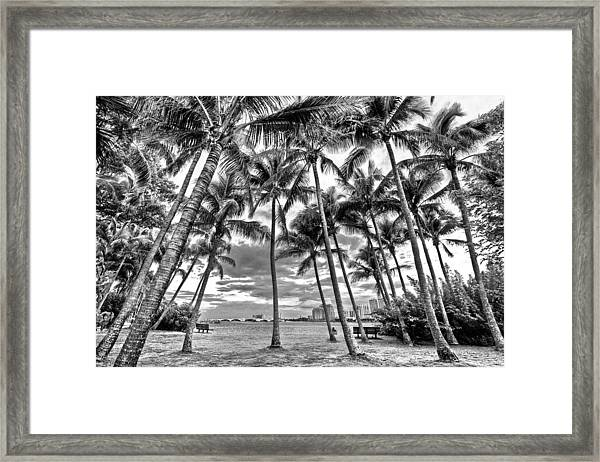 Sunset Grove At Palm Beach Framed Print