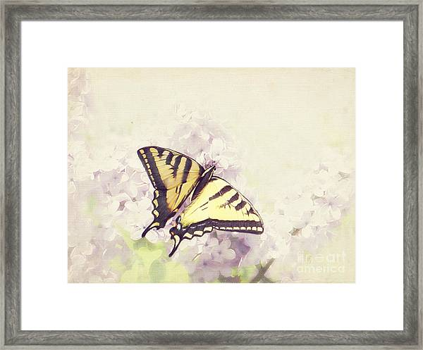 Swallowtail On Lilac Framed Print