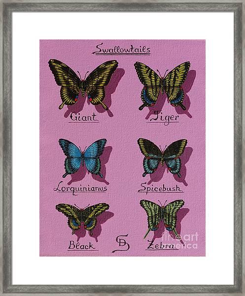 Swallowtails Framed Print