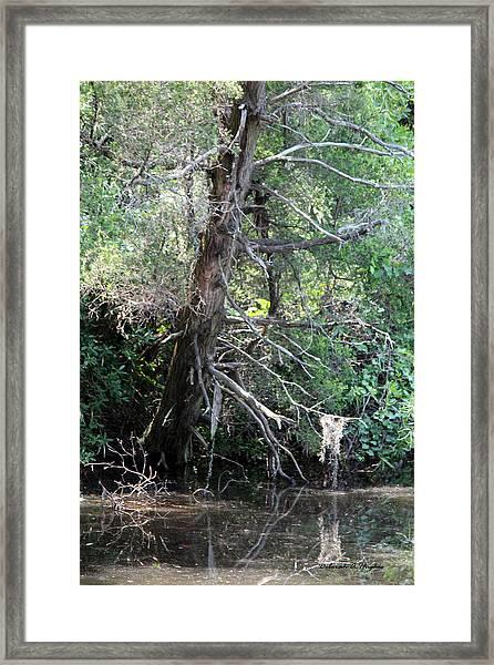 Swamp Tree Framed Print