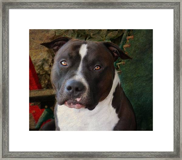 Sweet Little Pitty Framed Print by Larry Marshall