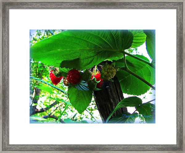 Sweet N Juicy Framed Print