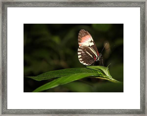 Take A Pose Framed Print