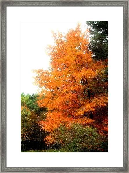 Tangerine Autumn  Framed Print by Darlene Bell