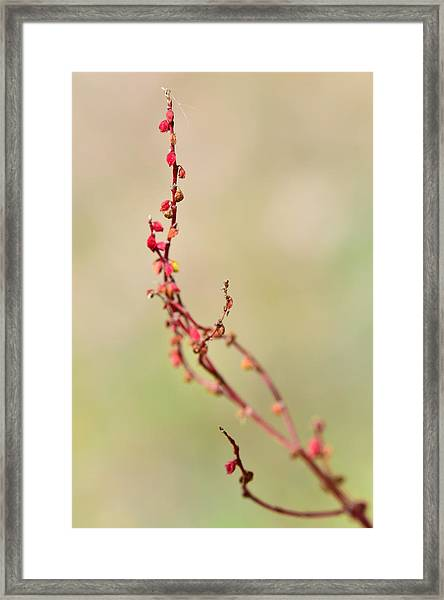 Tenderness In Japanese Style Framed Print
