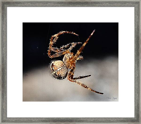 Tending The Web Invisible Framed Print