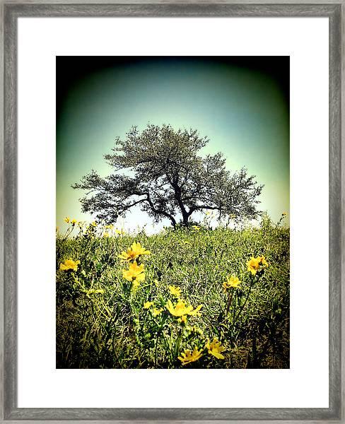 That Tree Framed Print