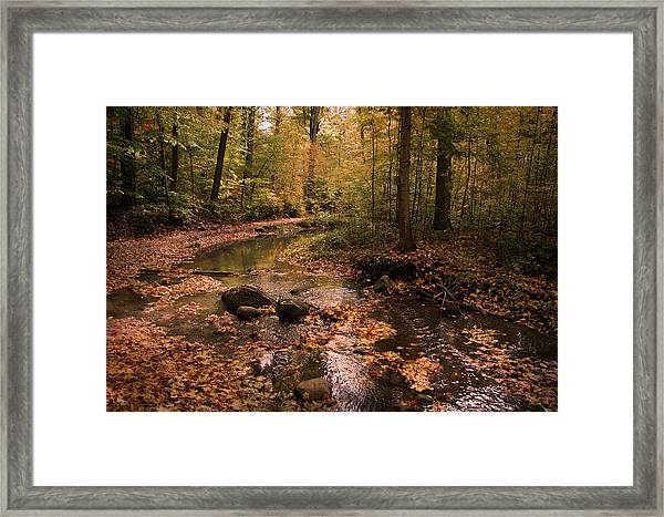 The Brook In The Woods Framed Print