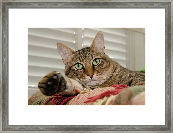 The Cat With Green Eyes Framed Print